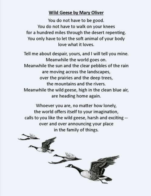 wild-geese-by-mary-oliver-w-photo-768x994
