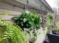 Gardening in quarantine 2