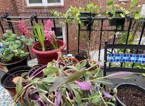 gardening in quarantine 3