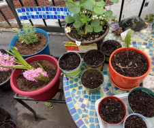 gardening in quarantine