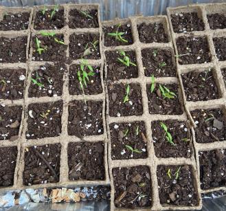 Quarantine gardening